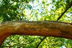 Η επιγραφή στο δέντρο Στοκ φωτογραφία με δικαίωμα ελεύθερης χρήσης