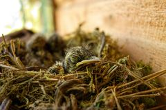 Η επισημασμένη flycatcher φωλιά Στοκ εικόνες με δικαίωμα ελεύθερης χρήσης