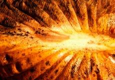 Η επιφάνεια ενός φύλλου φθινοπώρου στον ήλιο Στοκ Φωτογραφίες