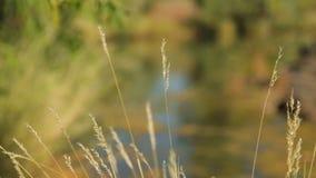 Η επιφάνεια ενός mossy waterhole φιλμ μικρού μήκους