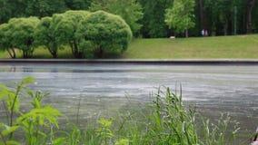 Η επιφάνεια του νερού καλύπτεται με τη γύρη φιλμ μικρού μήκους