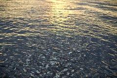 Η επιφάνεια του νερού στον ποταμό στο ηλιοβασίλεμα Στοκ φωτογραφίες με δικαίωμα ελεύθερης χρήσης