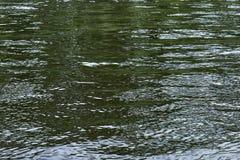 Η επιφάνεια του νερού στον ποταμό το καλοκαίρι Στοκ Φωτογραφίες