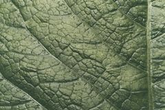 Η επιφάνεια του πράσινου φύλλου Στοκ φωτογραφία με δικαίωμα ελεύθερης χρήσης