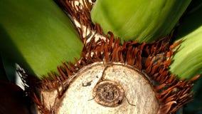 Η επιφάνεια Philodendron Στοκ φωτογραφίες με δικαίωμα ελεύθερης χρήσης