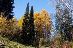 η επιφύλαξη φύσης, μικτό άγρια φύση δάσος αποτελείται από τα διαφορετικά είδη δέντρων, σκληρό ξύλο και τα κωνοφόρα, όλα τους αυξά στοκ εικόνες
