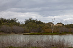 Η επιφύλαξη φύσης Charca de Maspalomas Στοκ εικόνα με δικαίωμα ελεύθερης χρήσης