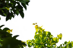 Η λεπτομέρεια απομόνωσε τα φύλλα Στοκ Φωτογραφία