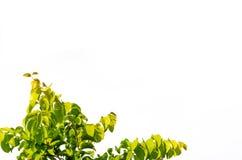 Η λεπτομέρεια απομόνωσε τα φύλλα Στοκ Εικόνες