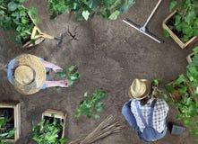 Η εργασία μαζί κηπουρικής ανδρών και γυναικών στο φυτικό κήπο, τοποθετεί εγκαταστάσεις στο έδαφος, τοπ άποψη με το διάστημα αντιγ στοκ εικόνες