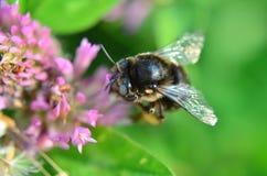 Η εργασία μελισσών Στοκ εικόνα με δικαίωμα ελεύθερης χρήσης