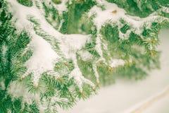Η ερυθρελάτη διακλαδίζεται στο χιόνι σε ένα υπόβαθρο οι κλίσεις Στοκ φωτογραφία με δικαίωμα ελεύθερης χρήσης