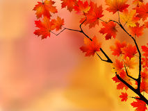 η εστίαση φθινοπώρου αφήν&eps Στοκ εικόνα με δικαίωμα ελεύθερης χρήσης