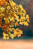 η εστίαση φθινοπώρου αφήν&epsi Στοκ Εικόνες