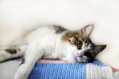 Η εσωτερική γάτα βρίσκεται στο μαξιλάρι στοκ εικόνα