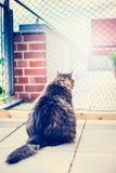 Η εσωτερική γάτα κάθεται μπροστά από καθαρό στο μπαλκόνι Αλιεία με δίχτυα γατών γάτα υπαίθρια στοκ εικόνα με δικαίωμα ελεύθερης χρήσης