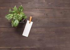 Η ετικέττα και flowerpot είναι στο ξύλινο υπόβαθρο Στοκ φωτογραφία με δικαίωμα ελεύθερης χρήσης