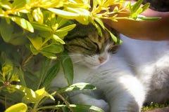 η ευτυχής γάτα χαϊδεύεται μεταξύ της πρασινάδας στοκ εικόνες με δικαίωμα ελεύθερης χρήσης