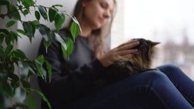 Η ευτυχής γυναίκα κάθεται στη στρωματοειδή φλέβα παραθύρων με μια γάτα στην περιτύλιξή της και κτυπά τη χνουδωτή γούνα της απόθεμα βίντεο