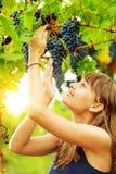 Η ευτυχής γυναίκα κρατά μια δέσμη σταφυλιών σε μια άμπελο με το φωτεινό ήλιο s στοκ εικόνα