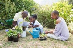 Η ευτυχής χαμογελώντας οικογένεια φυτεύει τα λουλούδια από κοινού Στοκ Εικόνα