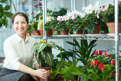 Η ευτυχής ώριμη γυναίκα φαίνεται Aphelandra Στοκ φωτογραφία με δικαίωμα ελεύθερης χρήσης