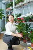 Η ώριμη γυναίκα επιλέγει anthurium Στοκ φωτογραφία με δικαίωμα ελεύθερης χρήσης