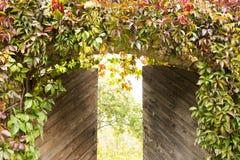 Η ελαφρώς ανοιγμένη πύλη στον κήπο, που εισβάλλεται με τα άγρια σταφύλια Στοκ εικόνες με δικαίωμα ελεύθερης χρήσης