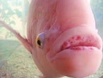 Η ελευθερία των ψαριών Στοκ Φωτογραφίες