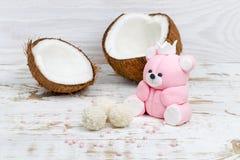 Η ζάχαρη αντέχει cub και την καρύδα στοκ φωτογραφίες με δικαίωμα ελεύθερης χρήσης