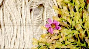 Η ζεστασιά και τα λουλούδια Στοκ φωτογραφία με δικαίωμα ελεύθερης χρήσης