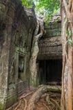 Η ζούγκλα που καταπατά στο ναό TA Prohm, Angkor, Καμπότζη Στοκ Φωτογραφία