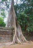 Η ζούγκλα που καταπατά στο ναό TA Prohm, Angkor, Καμπότζη Στοκ φωτογραφία με δικαίωμα ελεύθερης χρήσης