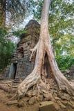 Η ζούγκλα που καταπατά στο ναό TA Prohm, Angkor, Καμπότζη Στοκ Εικόνες