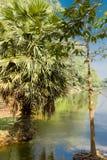 Η ζούγκλα σε Angkor Wat Στοκ Φωτογραφίες