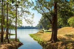 Η ζούγκλα σε Angkor Wat Στοκ εικόνα με δικαίωμα ελεύθερης χρήσης