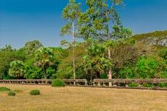 Η ζούγκλα σε Angkor Wat Στοκ Εικόνες