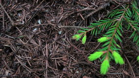 Η ζωή των μυρμηγκιών φιλμ μικρού μήκους