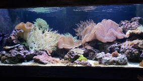 Η ζωή όλων των coralls χωρίς μερικά ψάρια στοκ φωτογραφία με δικαίωμα ελεύθερης χρήσης