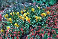 Η ζωηρόχρωμη ομάδα λουλουδιών Στοκ Φωτογραφία