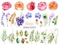 Η ζωηρόχρωμη floral συλλογή με τα τριαντάφυλλα, λουλούδια, φύλλα, ρόδι, σταφύλι, callas, πορτοκάλι, peacock επενδύει με φτερά απεικόνιση αποθεμάτων
