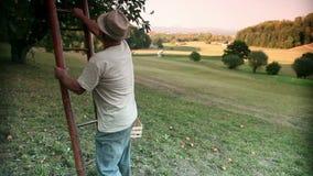 Ηληκιωμένος που αναρριχείται επάνω στη σκάλα σε ένα δέντρο μηλιάς φιλμ μικρού μήκους