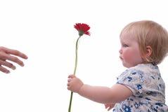 η ημέρα ανθίζει τις μητέρες Στοκ Εικόνες