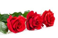 η ημερομηνία εορτασμού ανθοδεσμών ανθίζει τα κόκκινα τριαντάφυλλα μερικά στοκ εικόνα