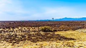 Η ημι περιοχή Karoo ερήμων στην ανατολική επαρχία ακρωτηρίων στη Νότια Αφρική Στοκ Εικόνες