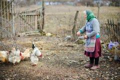 Η ηλικιωμένη γυναίκα αγροτών ταΐζει τις κότες στο προαύλιο στοκ φωτογραφίες