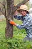 Η ηλικιωμένη γυναίκα καθαρίζει τον παλαιό φλοιό δέντρων μηλιάς Στοκ εικόνα με δικαίωμα ελεύθερης χρήσης