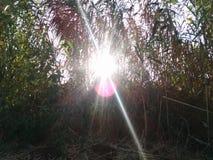 Η ηλιοφάνεια μέσω βγάζει φύλλα στοκ εικόνες