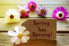 Η ηλιόλουστη ετικέτα με την άνοιξη κειμένων έχει αναπηδήσει με τα άνθη Cosmea στοκ εικόνα