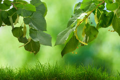 Η ηλιόλουστη ημέρα ομορφιάς στο δάσος, αφαιρεί τα φυσικά υπόβαθρα στοκ φωτογραφία με δικαίωμα ελεύθερης χρήσης